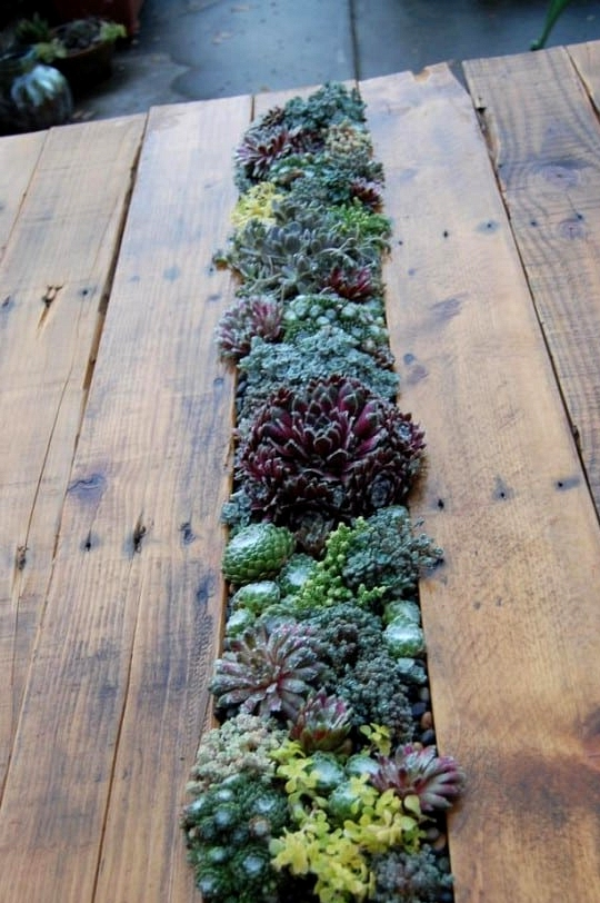 #20. Pallet SUCCULENT FILLED COFFEE TABLE
