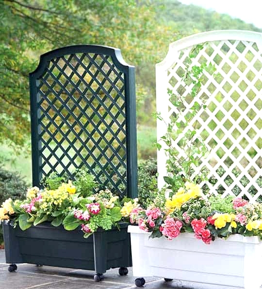 Buy a Planter With Trellis Attached