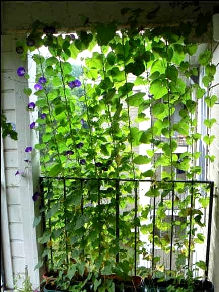 Use Some Gorgeous Hanging Vines