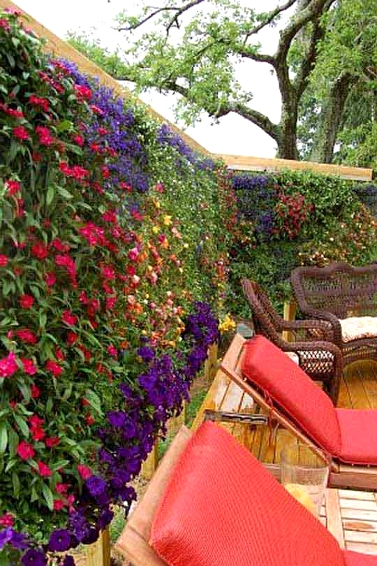 Create a Full Plant and Flower Privacy Wall