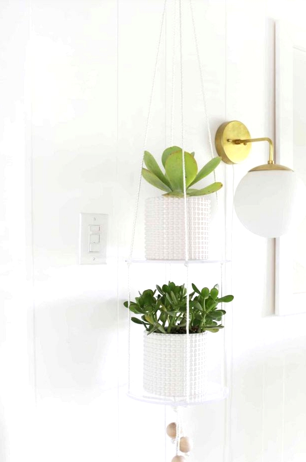 Acrylic shelves make your plants look like they are floating