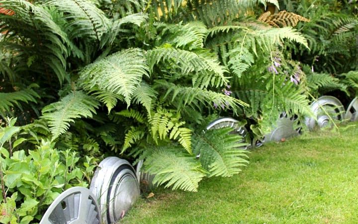 Line Up Recycled Hubcaps with Bigger Plants