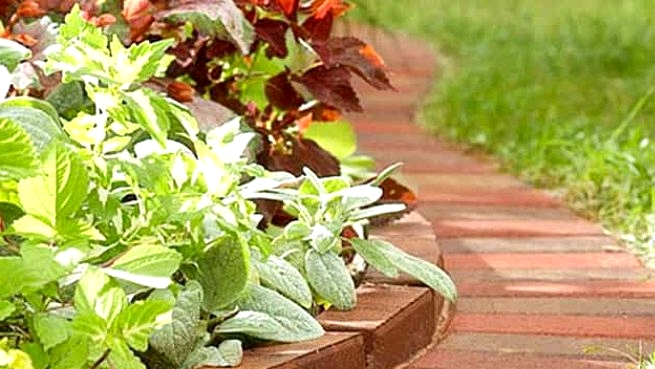 32 Beautiful Recommendations for Edging Your Backyard