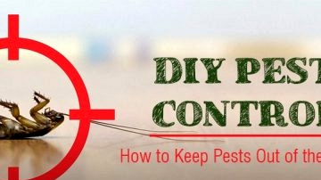 8 DIY Tricks to Management Pests in Arizona