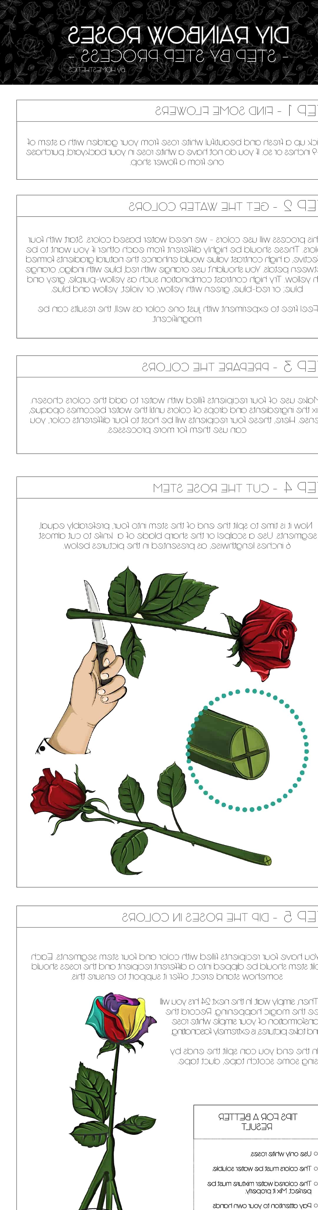 rainbow roses infographic