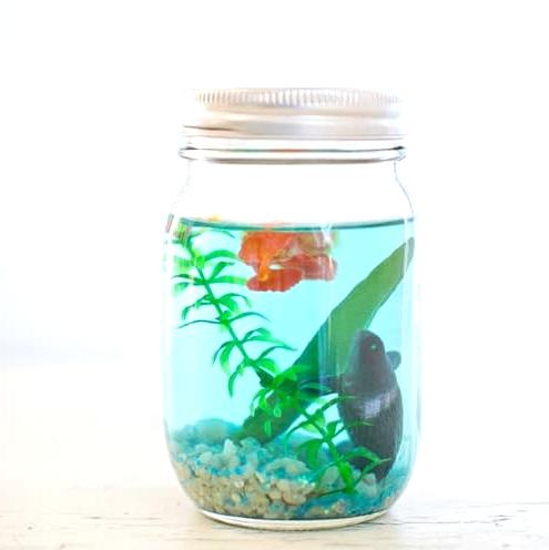 5-mason-jar-aquarium