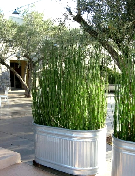 Plant Tall Grasses or Bamboo