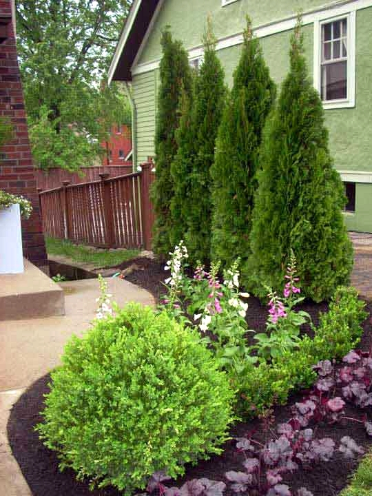 Plant Evergreens for a Tall Shrubbery Wall