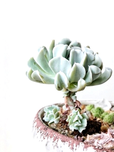 If your succulent is reaching or has a long stem, its a perfect time to use water propagation.