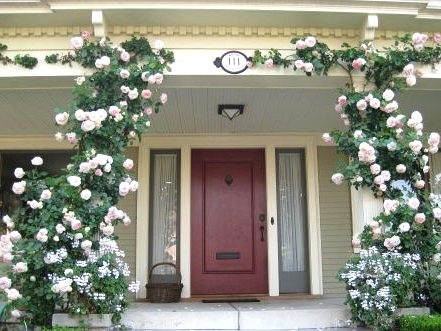 Get Climbing Plants for Front Columns