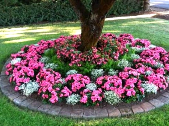 Plant a Circular Flower Bed for a Tree Base