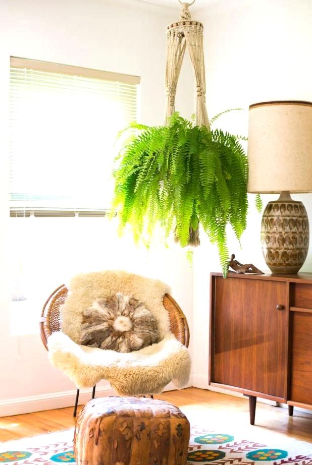 Boston Fern in a boho living room