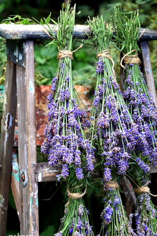 Hang Herbs and Flowers to Dry