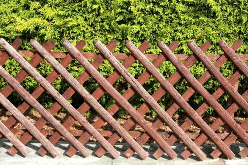 Build a High Wattle Border Fence