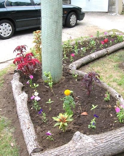 Tree Trunks Make a Natural Garden Boundary