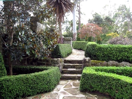 Plant Hedges for Tall Borders