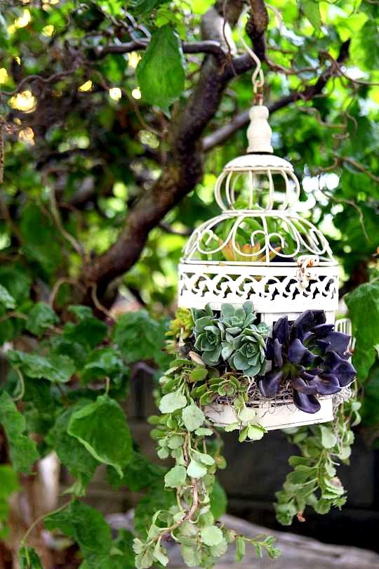 15 Enchanting DIY Succulent Garden Ideas You Will Adore