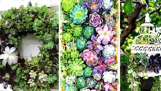 15 Enchanting DIY Succulent Backyard Concepts You Will Adore