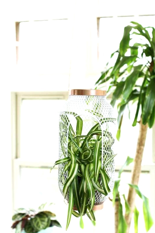 IKEA Hack for Plant lovers, turn a basic IKEA Lantern into a hanging planter