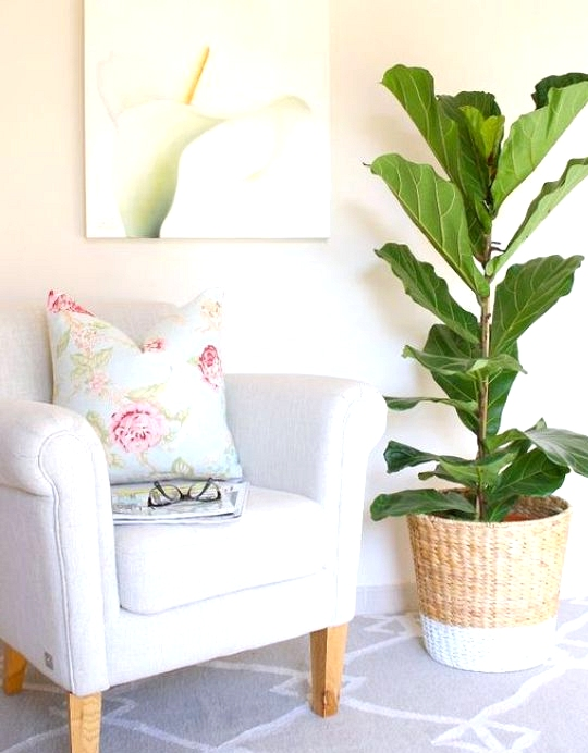 IKEA Hack dip painted wicker planter for fig tree