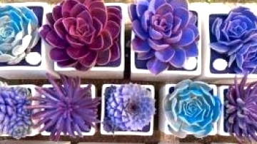 35 Straightforward and Reasonably priced DIY Succulents Challenge Concepts