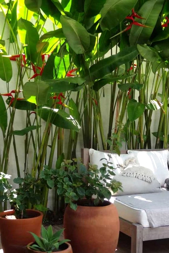 The Main Characteristics And How To Care of Heliconia
