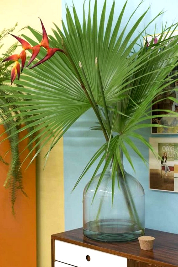 The Most important Traits And How To Care of Heliconia