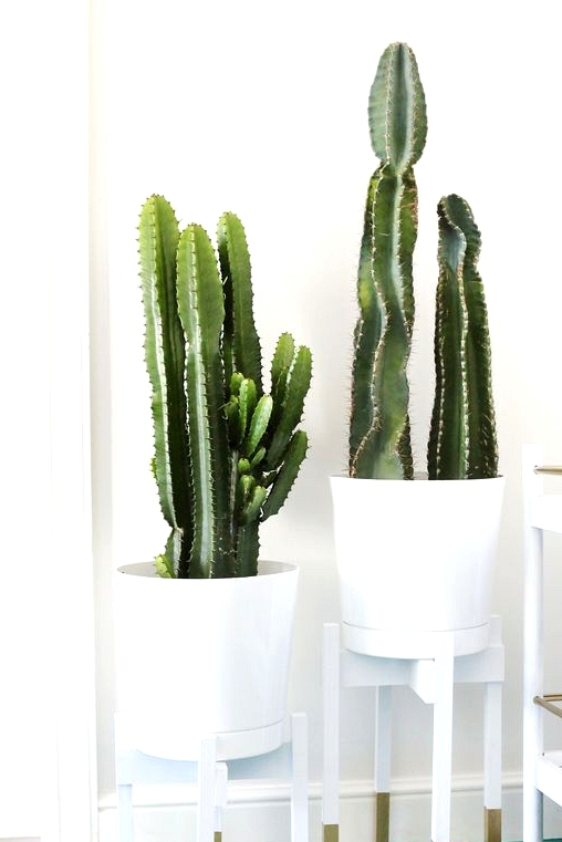 25 Straightforward and Low-cost DIY Plant Stand