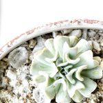 How To Propagate Succulents The Easy Way