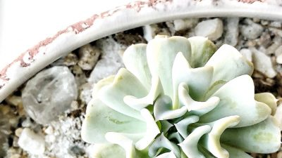 How To Propagate Succulents The Simple Approach